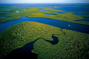 mangroves-parc-everglades