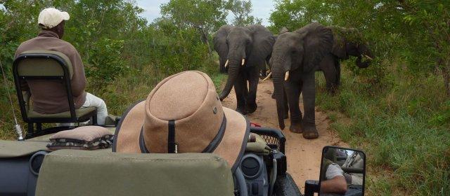 Safari en Afrique : une idée pour profiter de la beauté du monde